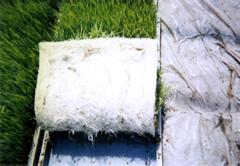 水稲用育苗培土 写真3